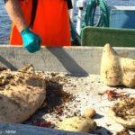 Deep-sea sponges of the North Atlantic