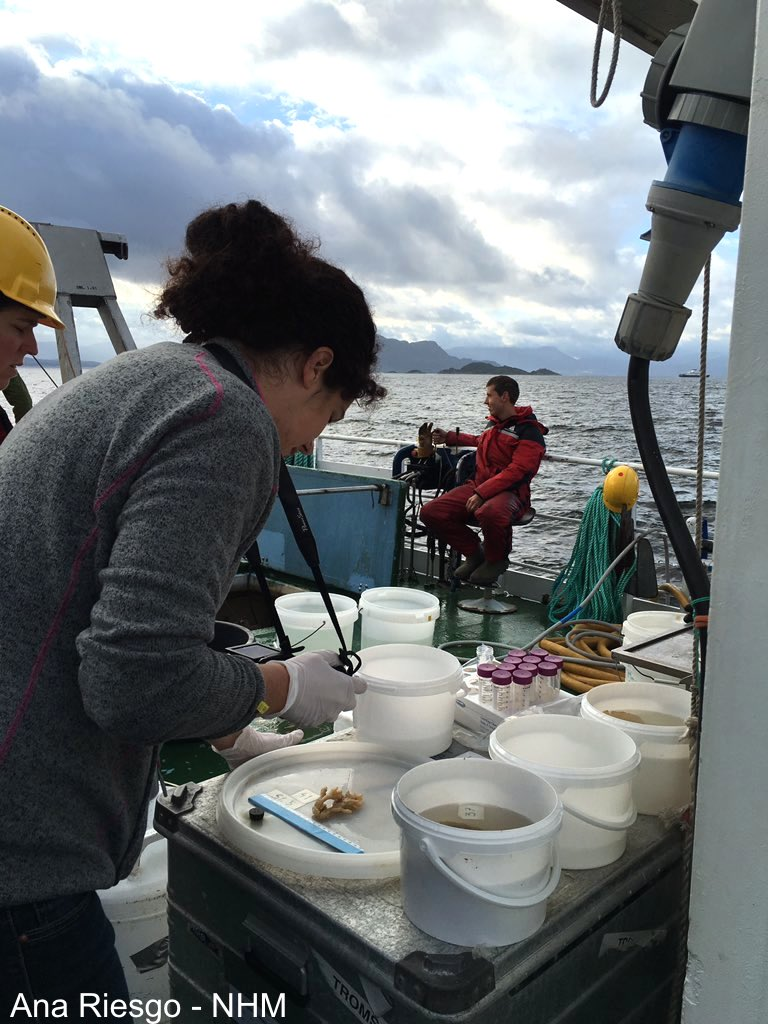 Deep-sea sponges from Norwegian fjords sampled by the EU project SponGES