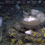 #SponGES #deepsea #cruise