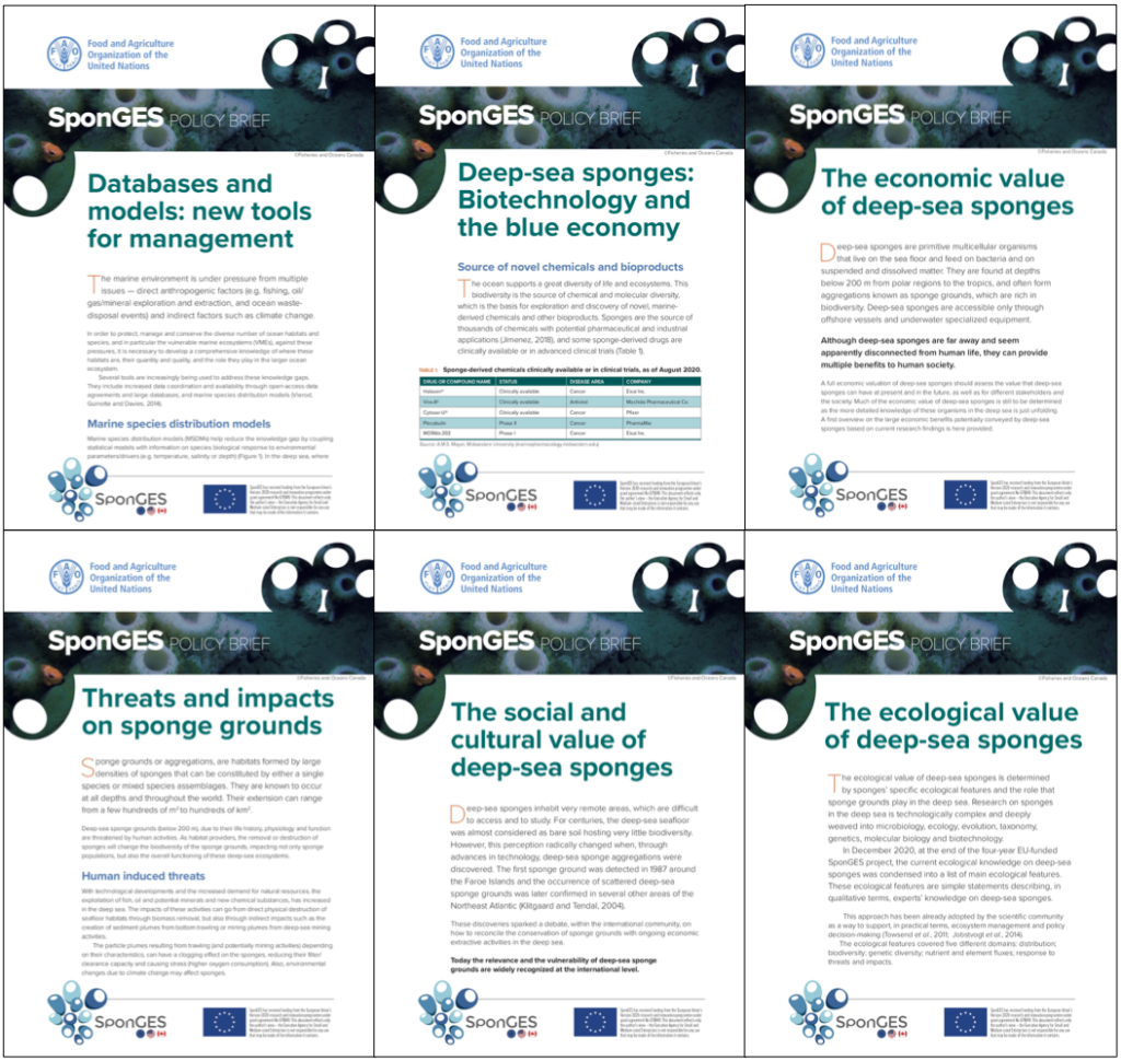 Six policy briefs by FAO about the management and value of deep-sea sponge grounds ecosystems